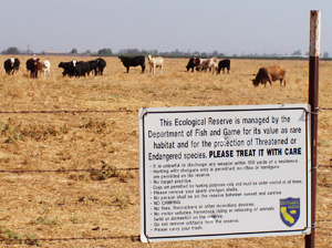 grazing management at Stone Corral Ecological Reserve, Tulare County