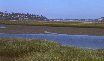 View of wetlands at Upper Newport Bay