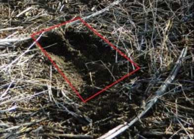 Photo of bobcat paw to demonstrate what a bobcat track looks like in the field
