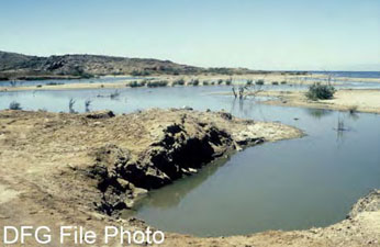 Lake habitat for desert pupfish
