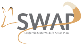 SWAP logo - link to primary SWAP page