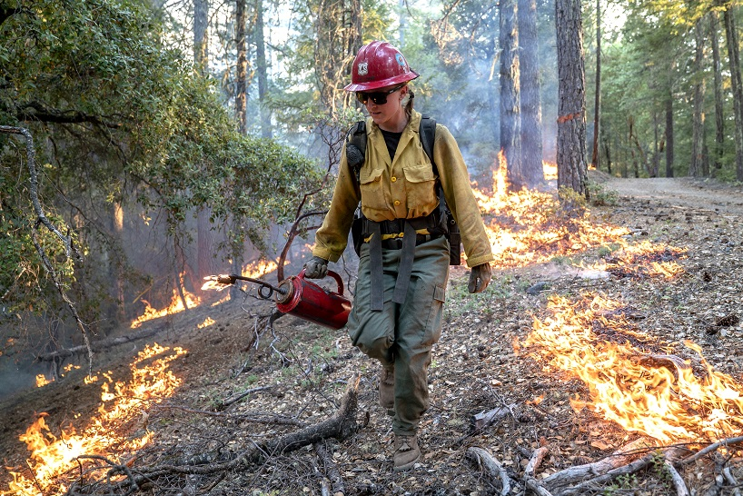 firefighter walking through forest using a drip torch device to burn lower vegetation