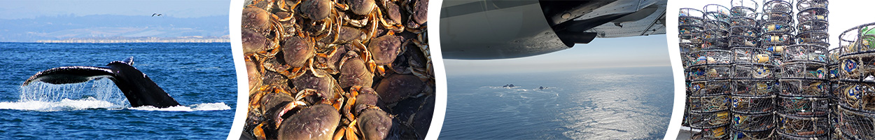 humpback whale fluke; Dungeness crabs; aerial photo of Farallon Islands; stack of Dungeness crab traps