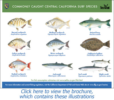 Anglers guide fish of australia (large): camtas international.