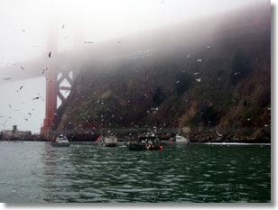 Commercial Fleet Fishing at the Golden Gate Bridge, Photo Credit: Ryan Bartling