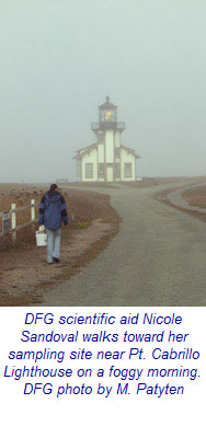 CDFW scientific aid Nicole Sandoval walks toward her sampling site near Pt. Cabrillo Lighthouse on a foggy morning