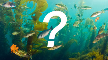 Marine Region's Fish Identification Quiz
