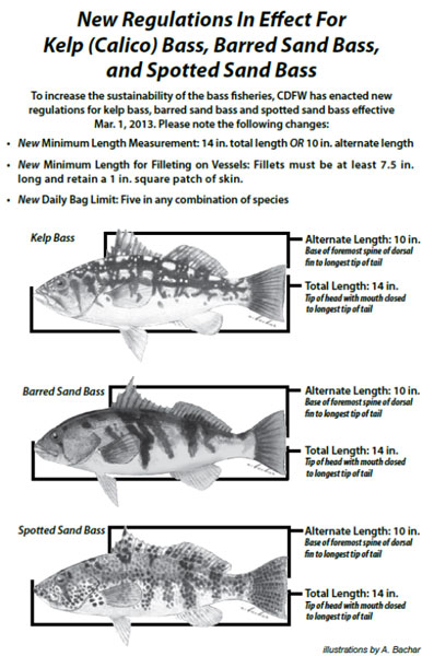 image of new regulations in effect for kelp