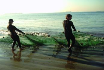 Seining for surf fish population study